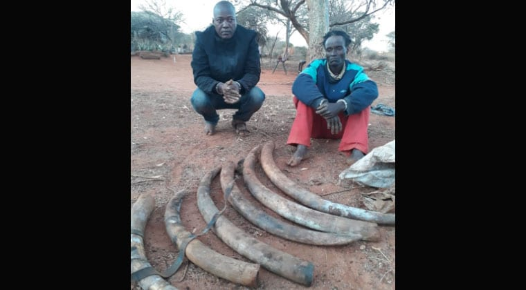 Two suspects arrested with 36kg elephant tusks, KWS says