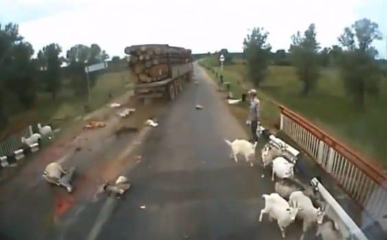 Lorry Kills 30 Sheep in Isinya