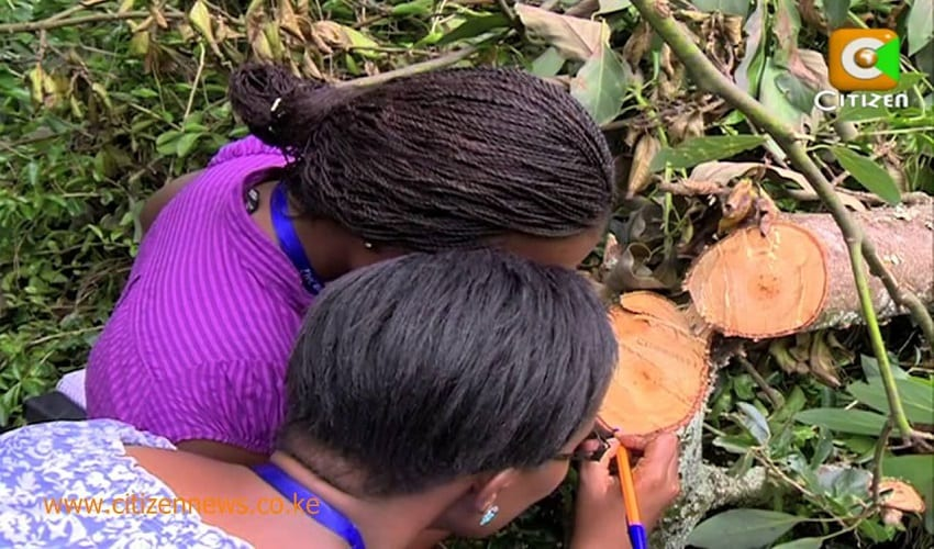 Elders cleanse Mugumo tree after nine days without sex