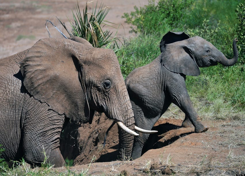2 people arrested, elephant tusks worth Ksh67M recovered