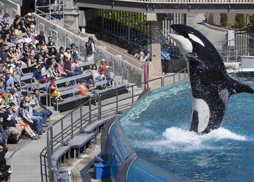 SeaWorld sues California commission over orca breeding ban