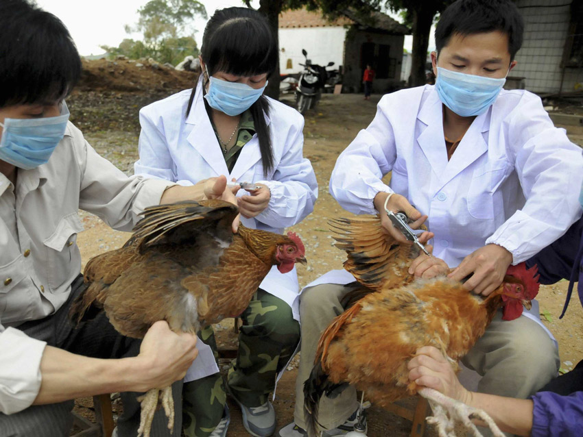 French bird flu poses no risk to humans – minister