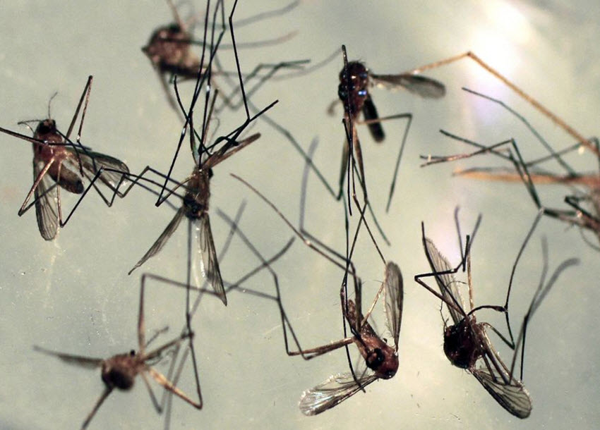 South Africa confirms first case of Zika virus