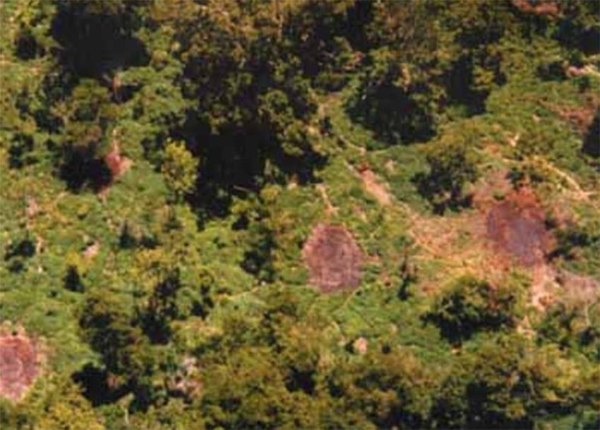 Forest conservation receives major boost
