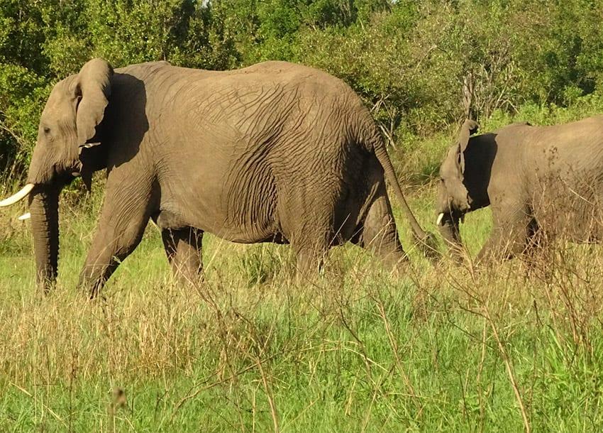 Taita Taveta residents cry foul over wildlife attacks