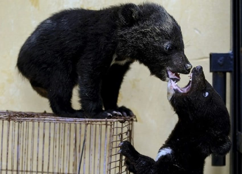 China defends use of wild animals in traditional medicine