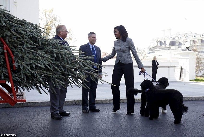 Michelle Obama recevies White House Christmas tree