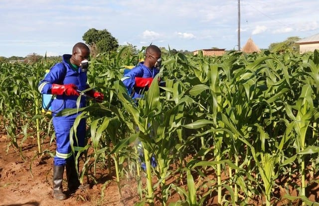 Armyworm outbreak spreading in southern Africa – FAO