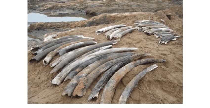 Three Nakuru businessmen charged with trafficking Ksh.1.6M elephant tusks