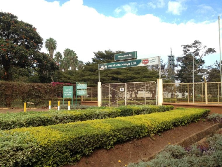 Blow to Del Monte as court declines to extend lease for Murang'a land