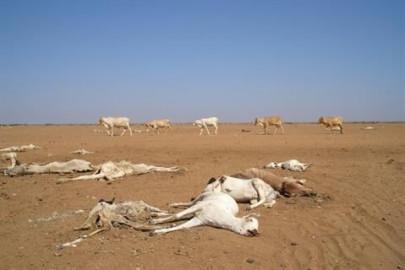 World Bank loans Kenya Ksh.16.7 billion for climate change mitigation